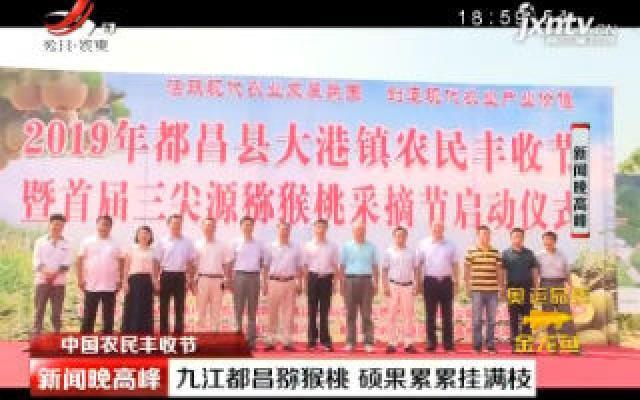 【中国农民丰收节】九江都昌猕猴桃 硕果累累挂满枝
