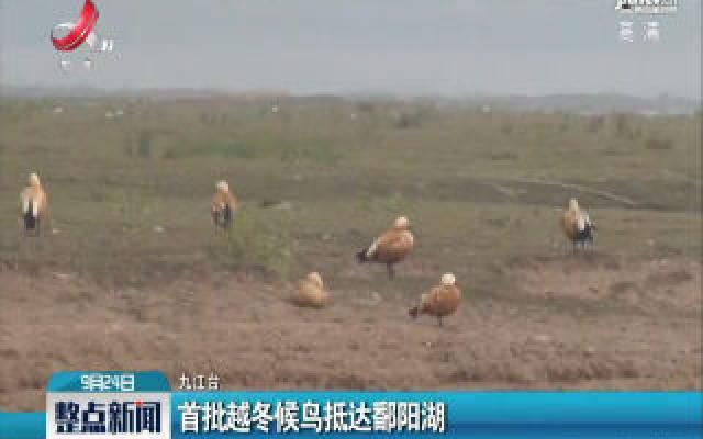首批越冬候鸟抵达鄱阳湖