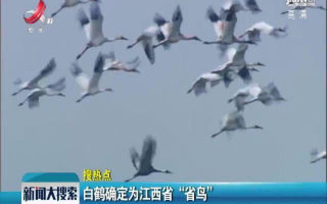"""白鹤确定为江西省""""省鸟"""""""