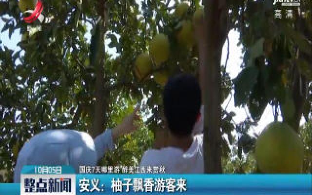 【国庆7天哪里游 醉美江西来赏秋】安义:柚子飘香游客来