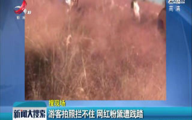 四川:游客拍照拦不住 网红粉黛遭践踏