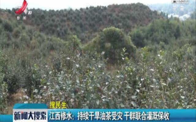 江西修水:持续干旱油茶受灾 干群联合灌溉保收