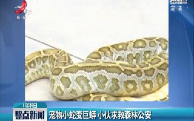 云南:宠物小蛇变巨蟒 小伙求救森林公安