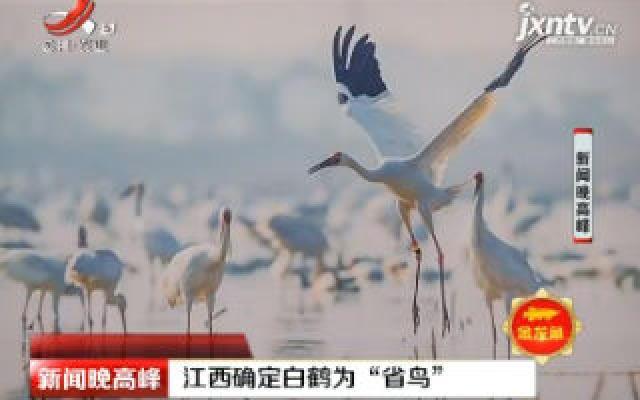 """江西确定白鹤为""""省鸟"""""""