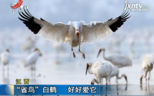 """江西:""""省鸟""""白鹤 好好爱它"""