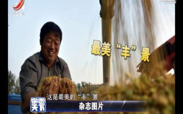 山东聊城2000多亩大豆进入丰收期