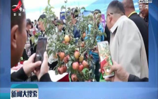 内蒙古:大叔盆栽种出苹果树 在家就可摘果