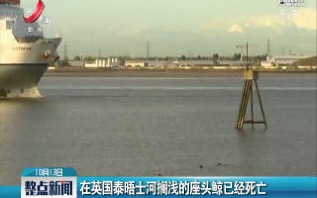 在英国泰晤士河搁浅的座头鲸已经死亡