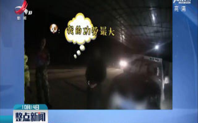 广西河池:酒驾撞人躲进草坡 它立了功