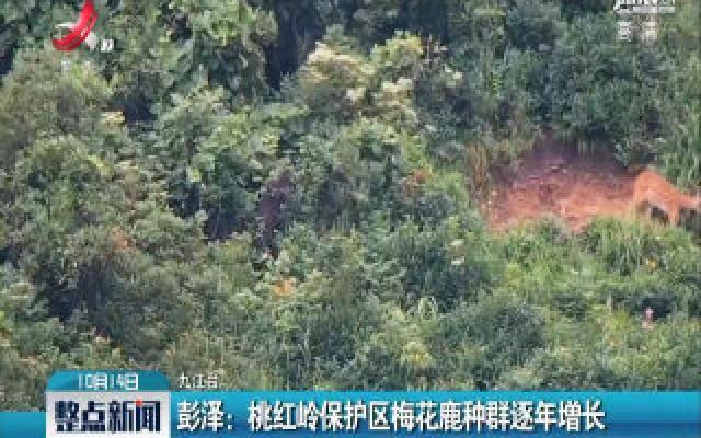 彭泽:桃红岭保护区梅花鹿种群逐年增长