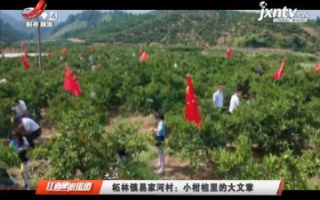 九江柘林镇易家河村:小柑桔里的大文章