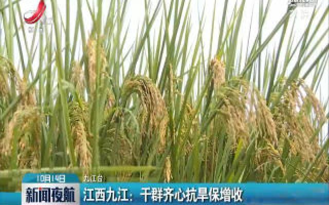 江西九江:干群齐心抗旱保增收