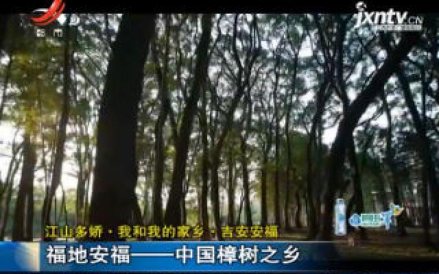 【江山多娇·我和我的家乡·吉安安福】福地安福——中国樟树之乡