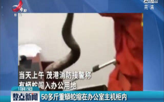 广东茂名:50多斤重蟒蛇缩在办公室主机柜内