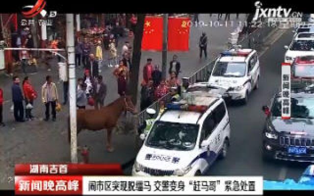 """湖南吉首:闹市区突现脱缰马 交警变身""""赶马哥""""紧急处置"""