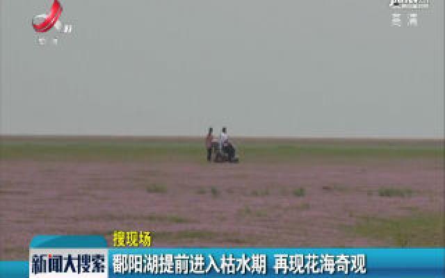 鄱阳湖提前进入枯水期 再现花海奇观