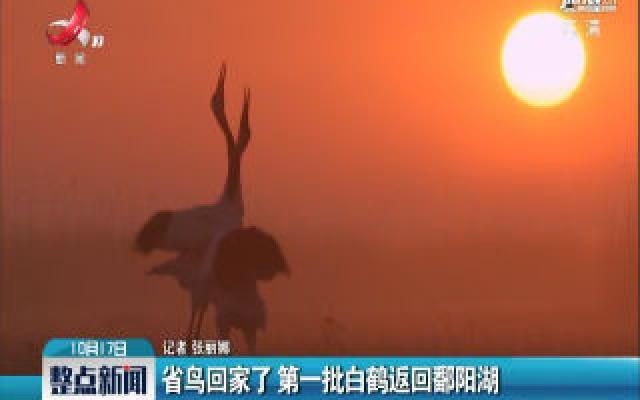 省鸟回家了:第一批白鹤返回鄱阳湖