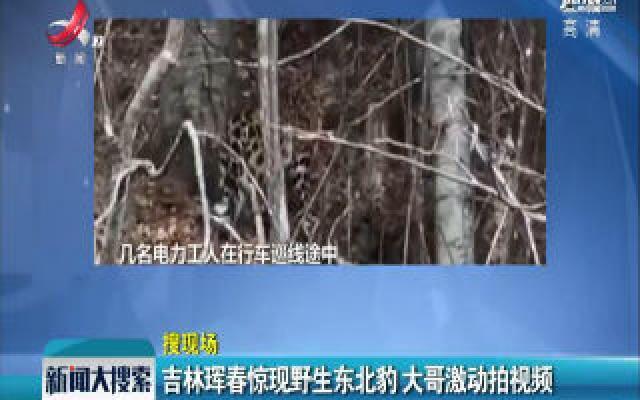 吉林晖春惊现野生东北豹 大哥激动拍视频
