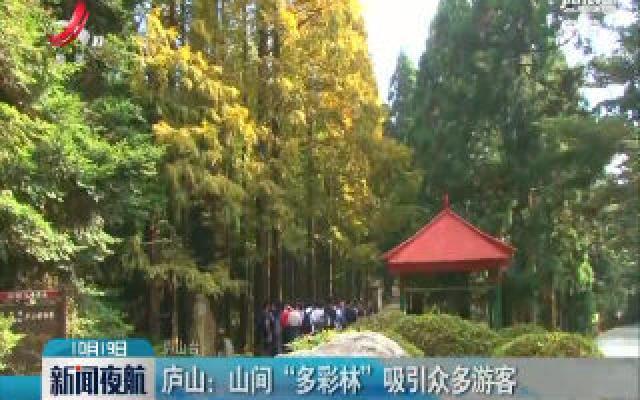 """庐山:山间""""多彩林""""吸引众多游客"""
