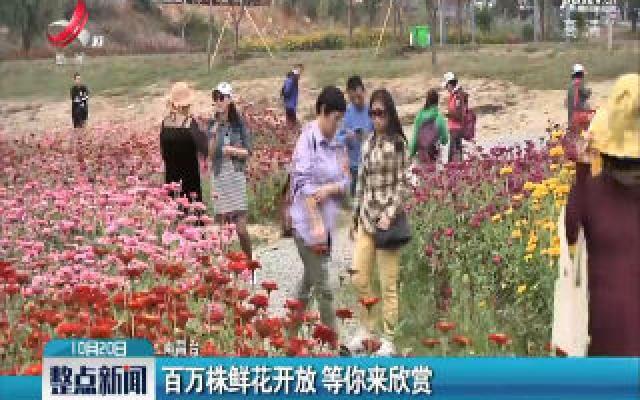 南昌:百万株鲜花开放 等你来欣赏