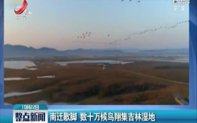南迁歇脚 数十万候鸟翔集吉林湿地