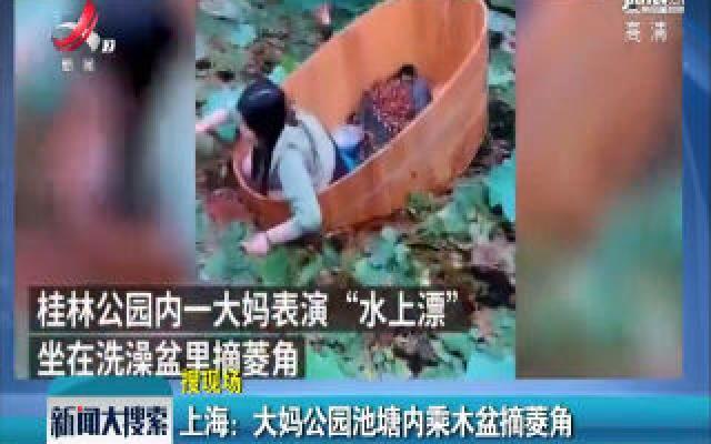 上海:大妈公园池塘内乘木盆摘菱角