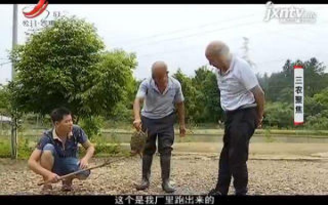 """三农聚焦20191025 蠢萌的龟中""""王者""""如何创造巨额财富"""