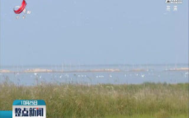 5万冬候鸟到达大汊湖