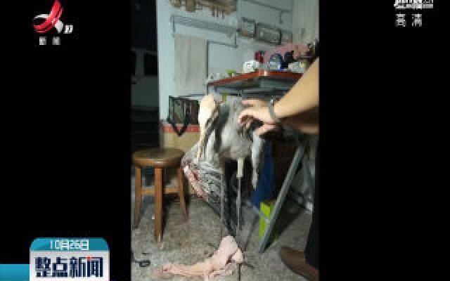 修水:国家二级保护动物灰鹤受伤被救