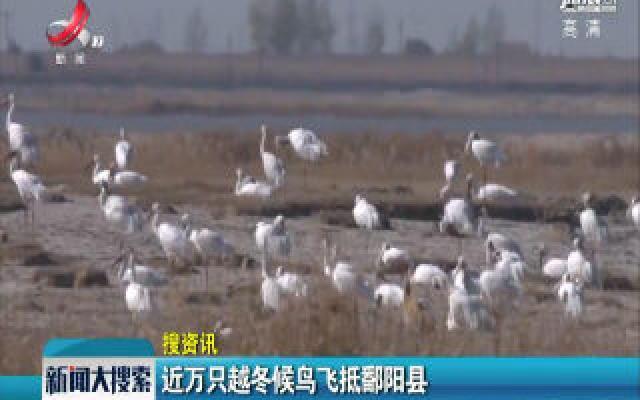 近万只越冬候鸟飞抵鄱阳县