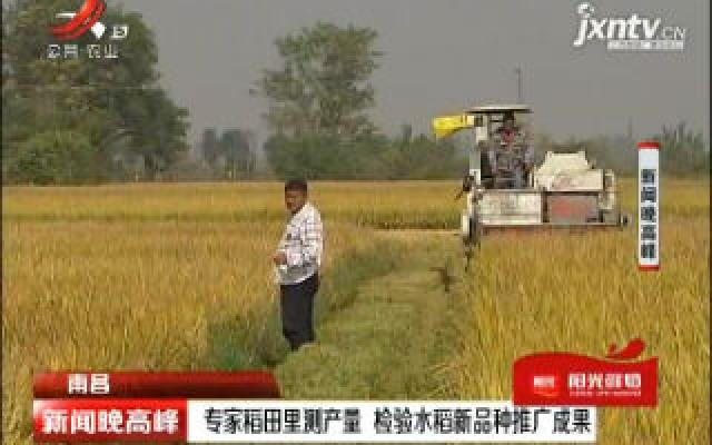 南昌:专家稻田里测产量 检验水稻新品种推广成果