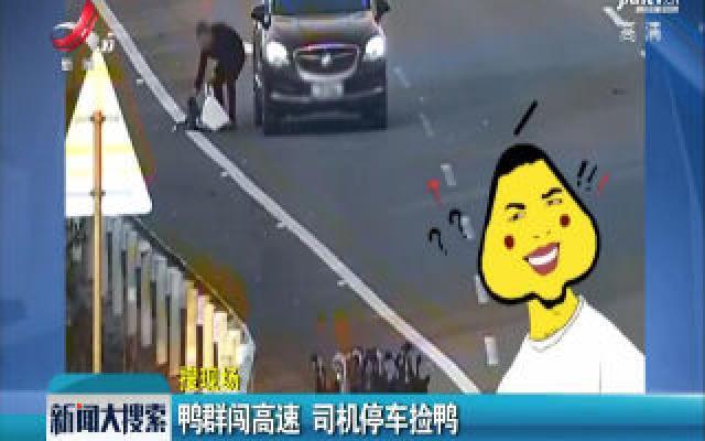 抚州:鸭群闯高速 司机停车捡鸭