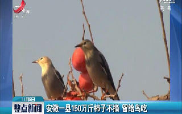 安徽一县150万斤柿子不摘 留给鸟吃