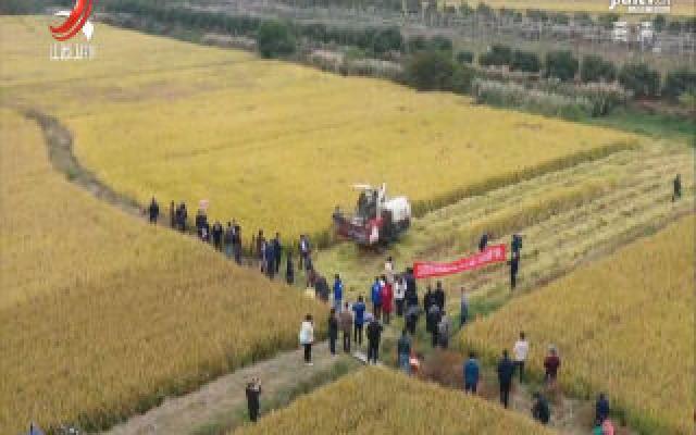 破纪录!我省双季晚粳稻亩产突破800公斤
