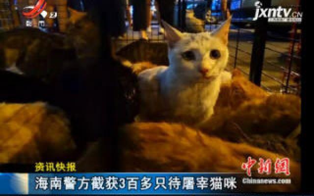 海南警方截获3百多只待屠宰猫咪