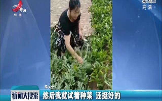 哈尔滨:女子砖缝里种菜 一年四季不用买菜