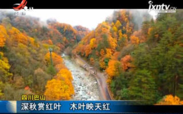 四川巴山:深秋赏红叶 木叶映天红