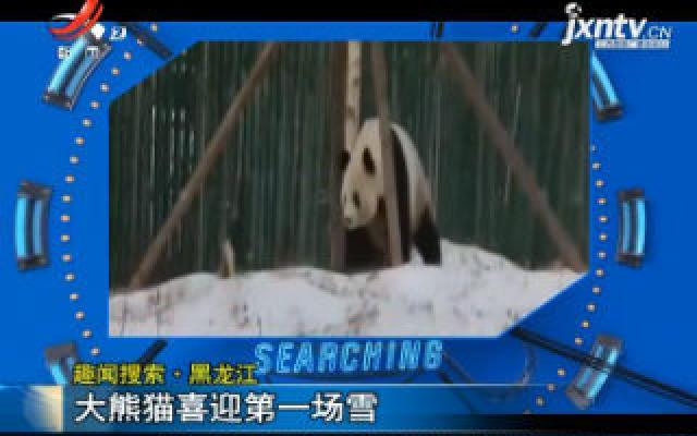 【趣闻搜索】黑龙江:大熊猫喜迎第一场雪