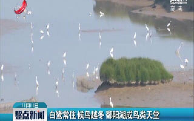 白鹭常住 候鸟越冬 鄱阳湖成鸟类天堂