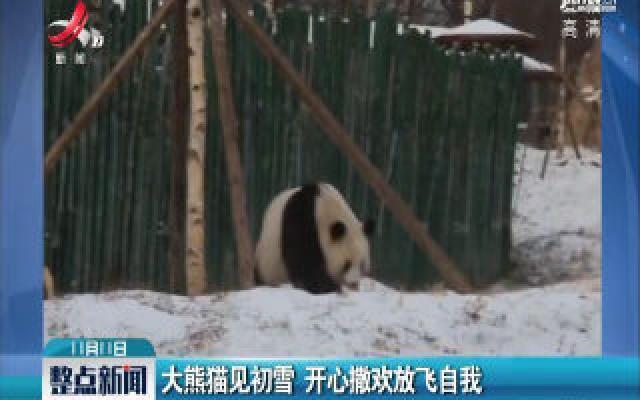 黑龙江:大熊猫见初雪 开心撒欢放飞自我