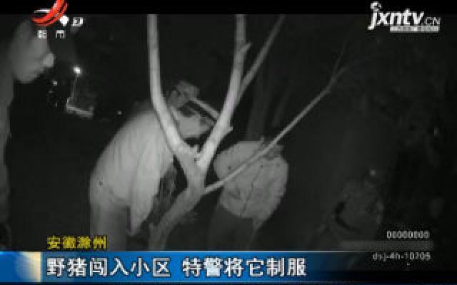 安徽滁州:野猪闯入小区 特警将它制服