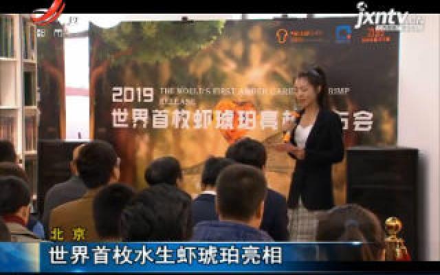 北京:世界首枚水生虾琥珀亮相