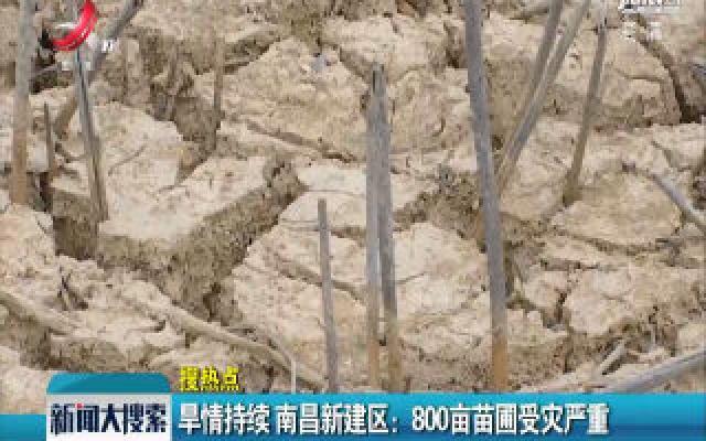 旱情持续 南昌新建区:800亩苗圃受灾严重