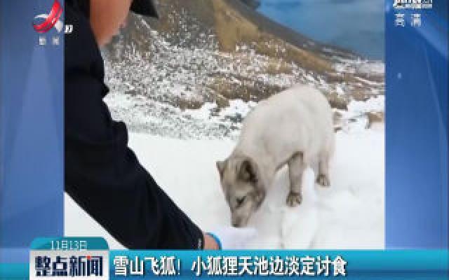 吉林:雪山飞狐! 小狐狸天池边淡定讨食