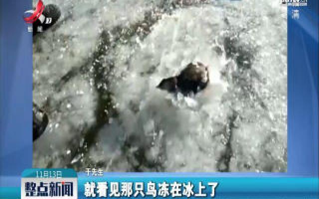 黑龙江:鸟冻冰里了! 小伙凿碎冰将它放飞