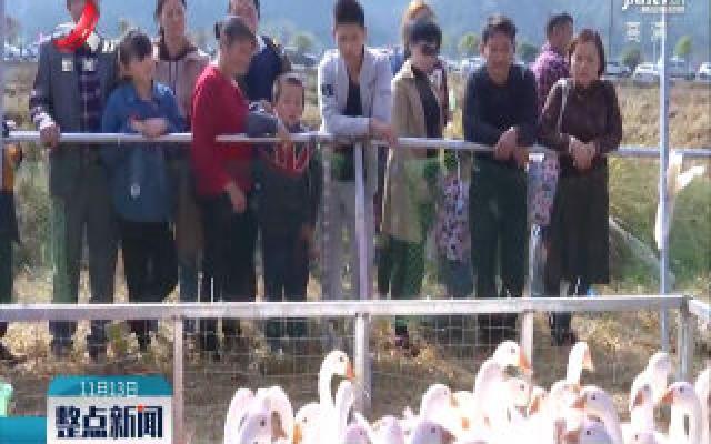 宜丰县举办2019中国寒兰节暨乡村嘉年华
