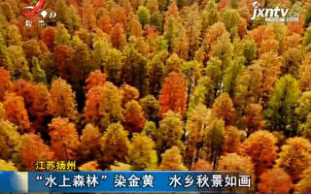 """江苏扬州:""""水上森林""""染金黄 水乡秋景如画"""
