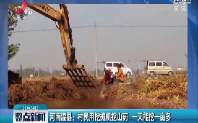河南温县:村民用挖掘机挖山药 一天能挖一亩多
