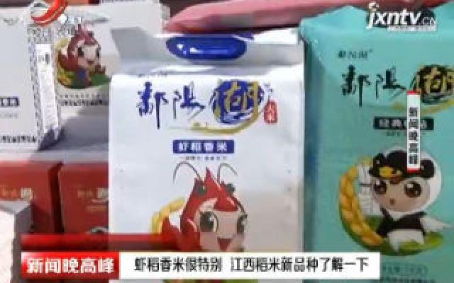 虾稻香米很特别 江西稻米新品种了解一下