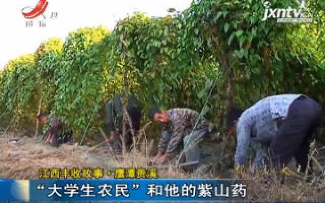 """江西丰收故事·鹰潭贵溪:""""大学生农民""""和他的紫山药"""